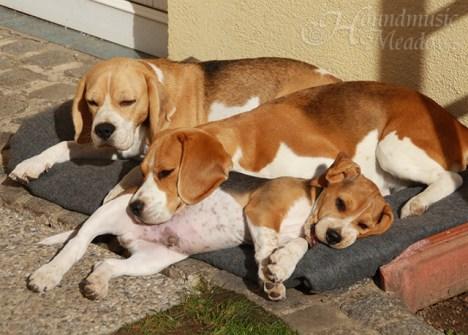 Sonnenbad mit Ziva und Mama