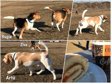 auch Artù's Beaglekumpel Bugie hat Spaß