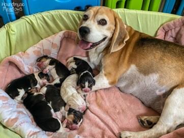 Marcie & ihre 6 kleinen Darlings