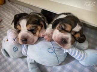 Dustin & Cody, Tag 11