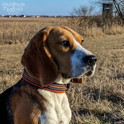 (Beagle-) Blick in die Ferne...