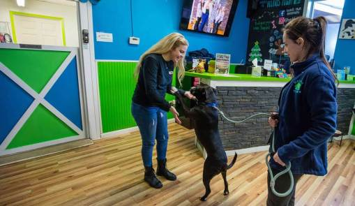 How Hounds Town USA is Leading the Pet Care Industry