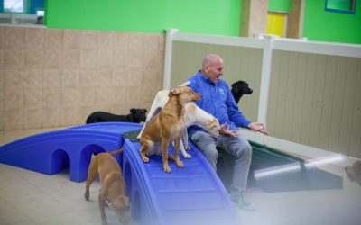 At Hounds Town USA, It's Dogs First, People Second