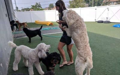 Doggy Daycare Hounds Town Island Park Celebrates 1 Year Anniversary