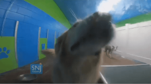 New York-Based Luxury Doggy Daycare Opens First NJ Location
