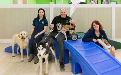 Pet Care Franchise Hounds Town Profiled in Long Island Business News