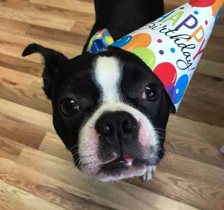 Dog Day Care South Jersey Franchise