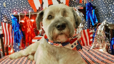 Our Doggie Daycare Franchise Helps Pups Cope With the Fourth!