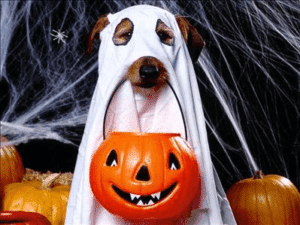 ghost dog franchise
