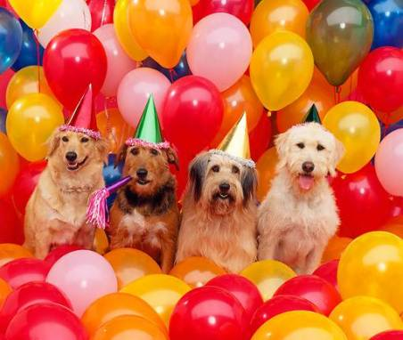 Island Park Dog Daycare Celebrates Two Tail-Wagging Years!