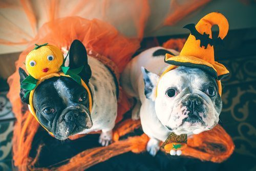 Make it a Happy HOWL-o-ween with Hounds Town!
