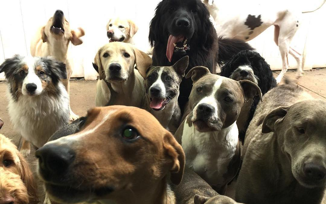 Dog Day Care Franchises and Their Importance in the Community