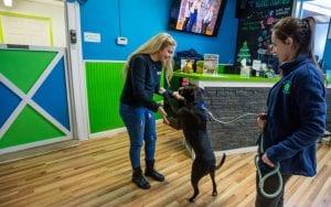 dog daycare franchises