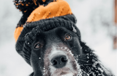 Winter Safety Tips from Dog Daycare Franchise Experts