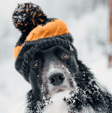 dog daycare franchise winter