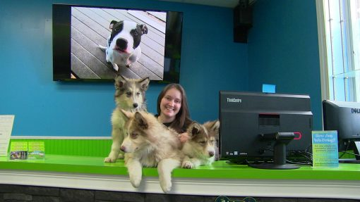 Our Pet Franchise Featured in Pittsburgh Pet Connections