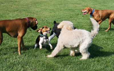 How to Open A Doggie Daycare Business