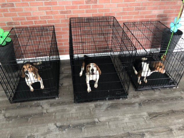 Dog Day Care Hounds Town Bergen