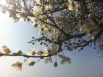 Fleur Hourbanon 2