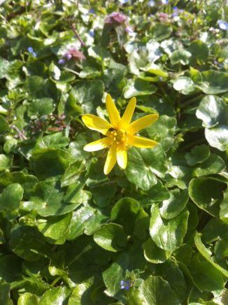 Fleur Hourbanon 4