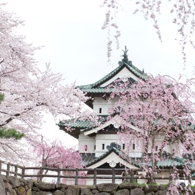 Hirosaki Castle and the Blossoms