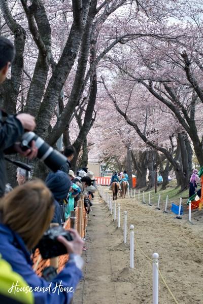 Towada Cherry Blossom Horse Festival
