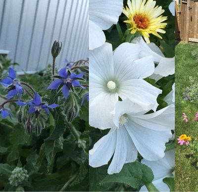 Create a Bird, Bee and Butterfly Garden
