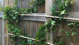 DIY Faux Copper Pipe Trellis | House by the Bay Design