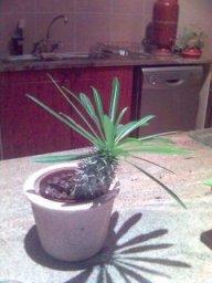 IndoorPotPlants.jpg