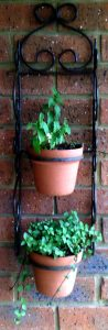 Chocolate mint and spearmint are great additions to the patio wall...