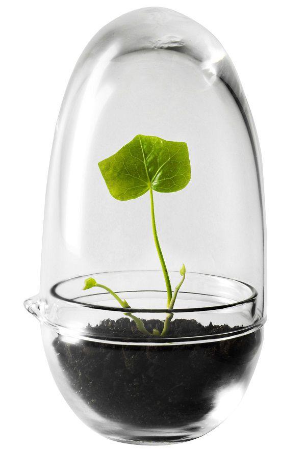 Mini serra Grow idee regalo design
