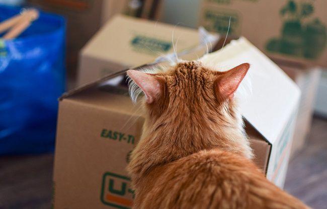 Organizzare trasloco animali gatti