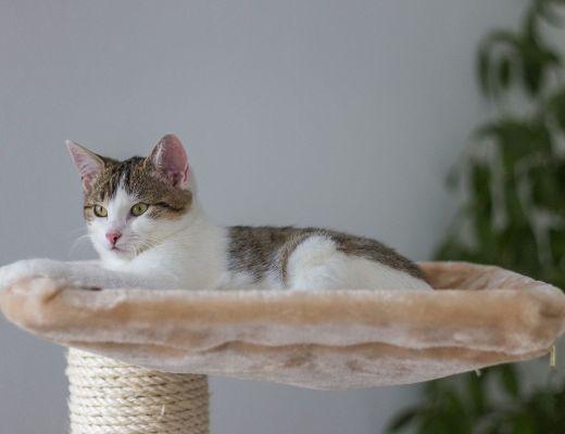 amaca gatti casa