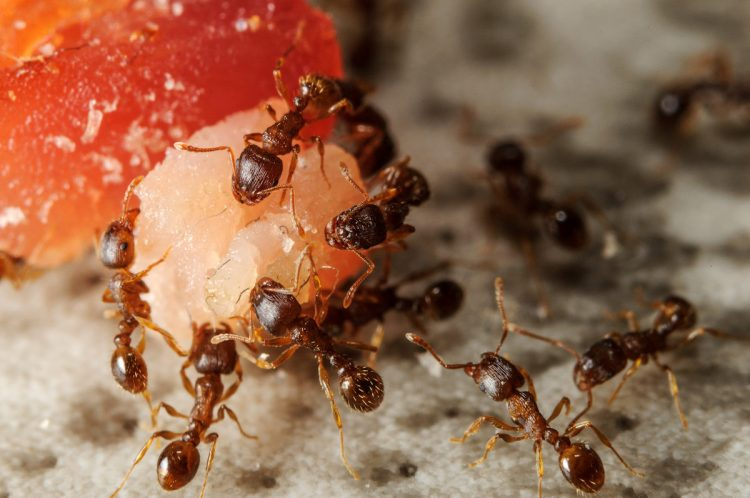 Image result for ants eating sweets
