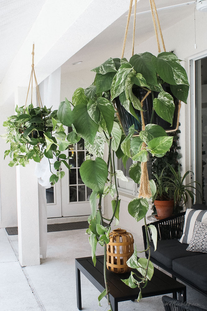 Blank patio turned plant-filled retreat   House Mix on Plant Hanging Ideas  id=93550