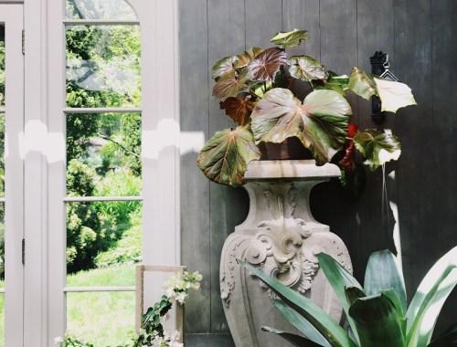 GardenShow / House of Brinson