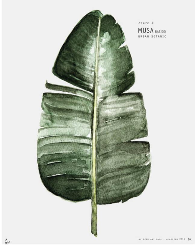 Botanical art work prints