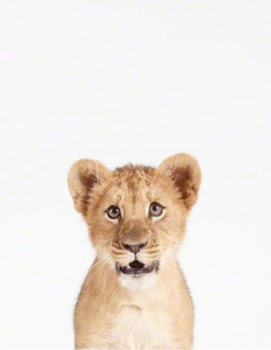 Animal-print-shop-lion-cub