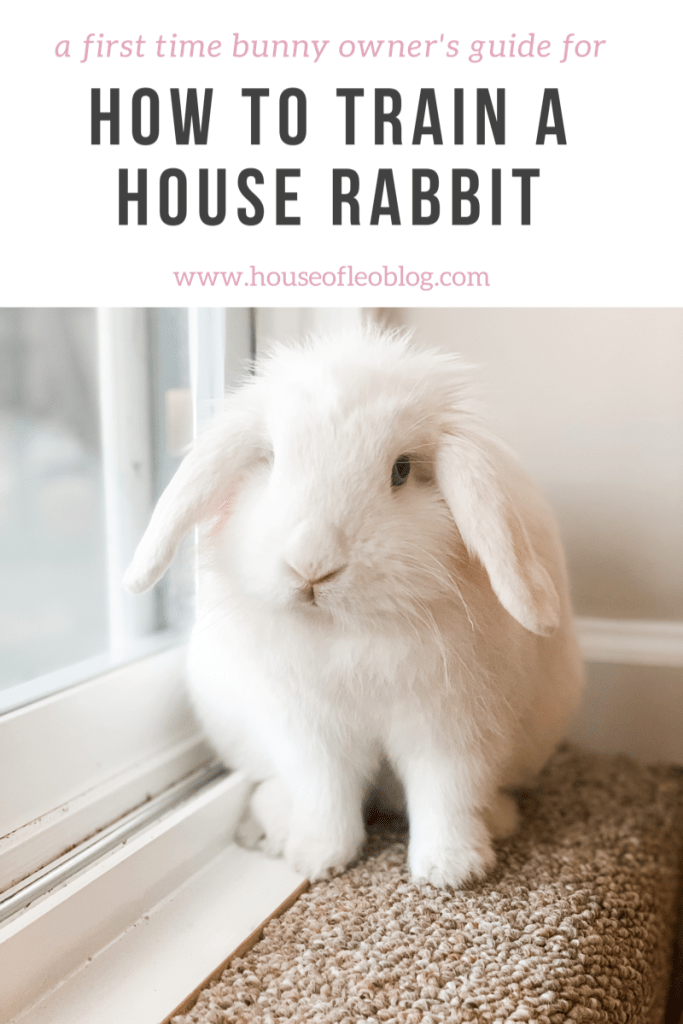 How to Train A House Rabbit by top US lifestyle blog, House of Leo Blog: image of how to train a house rabbit