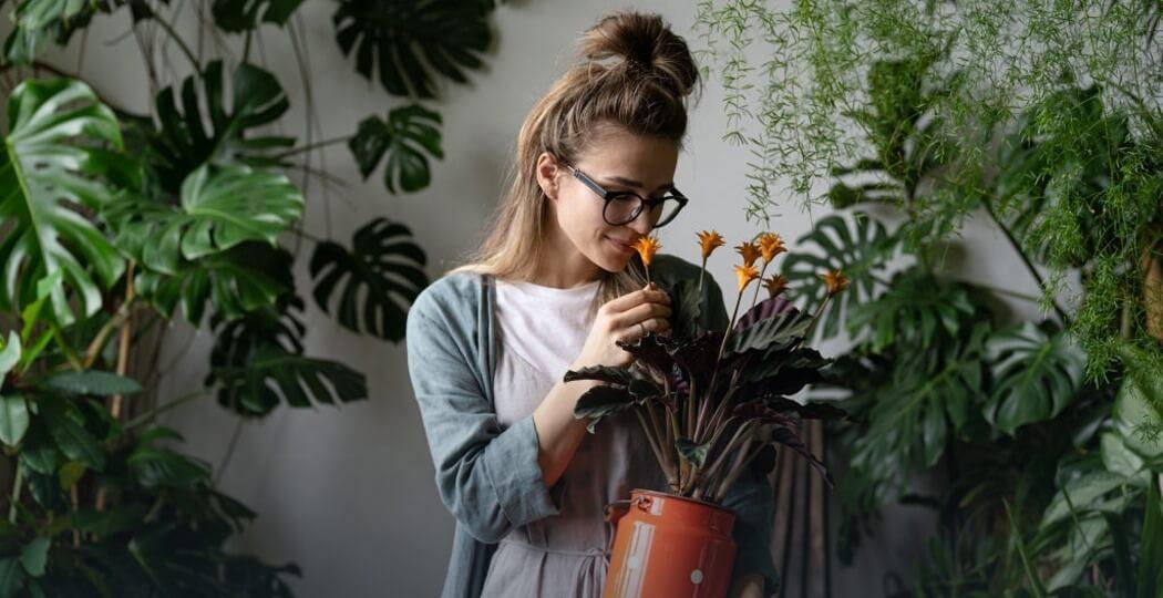 Indoor Plants, grow indoor plants, indoor gardening