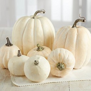 Faux white pumpkins for Fall display - direct link to Amazon - House on Winchester
