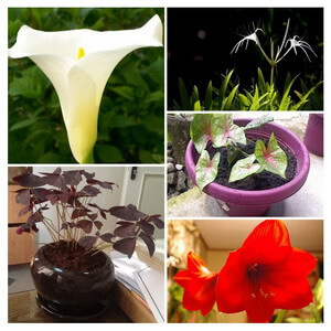 bulb plant collage