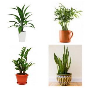 various plants collage