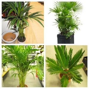 indoor palm plant collage