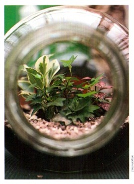 Using Glass Containers For House Plants