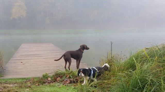 dogs enjoy the lake