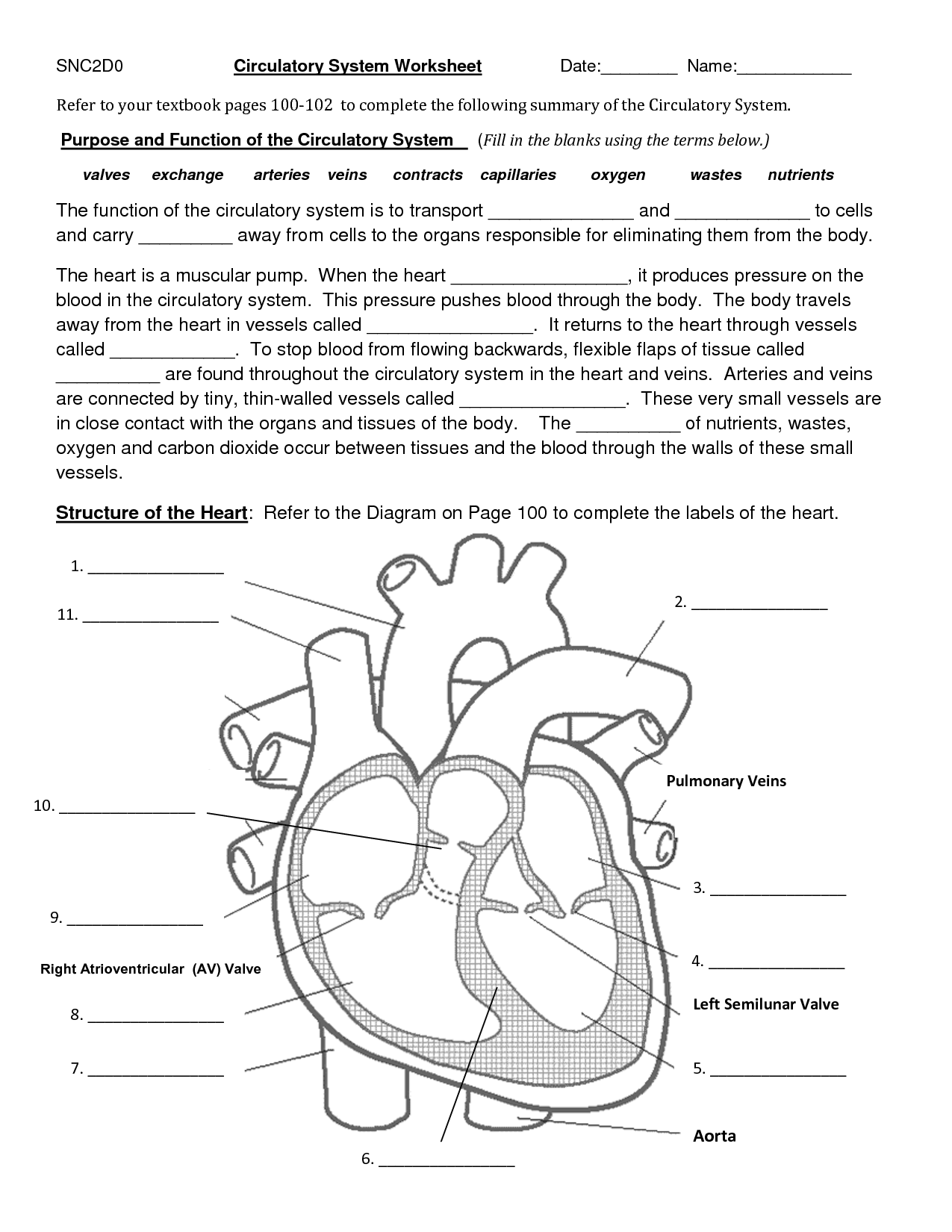 The Circulatory System Worksheets Answers
