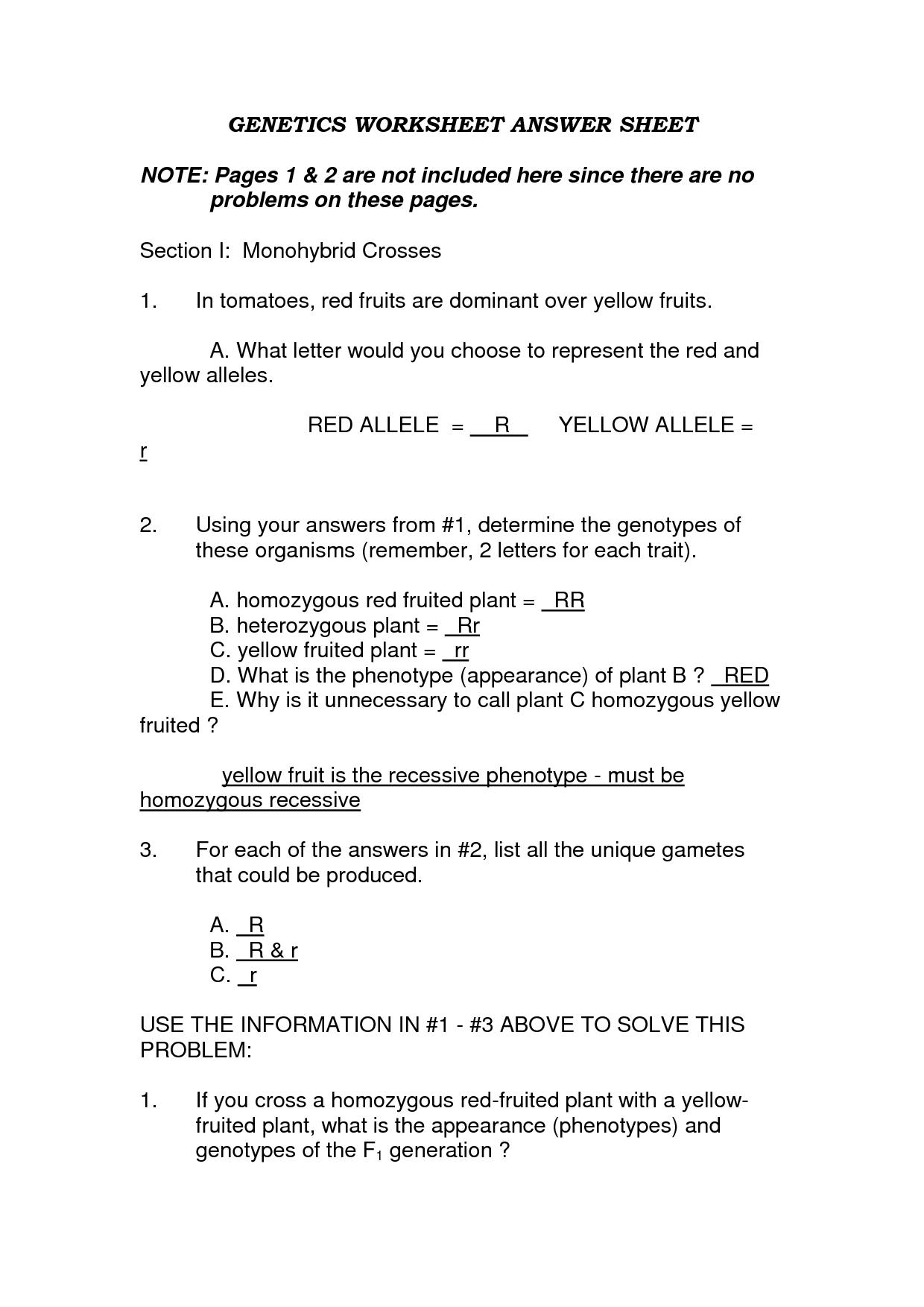 Monohybrid Crosses Worksheet Answers