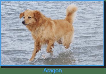 Aragon vom Hohenloher Land