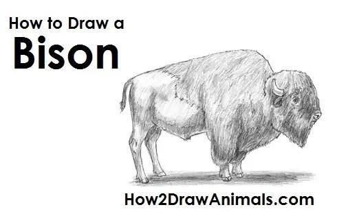 Pencil Drawings Wolf Cartoon